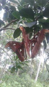 Sự ngụy trang khéo léo của loài bướm